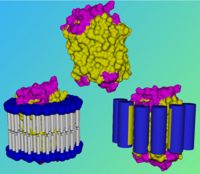 Molecular engineering of water soluble membrane proteins